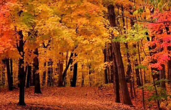 fall-foliage1-e1350664350761